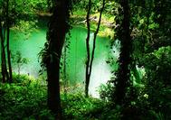 Viajes a Panama | Gamboa Selva