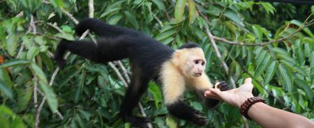 Viaje a Panama | Gamboa mono