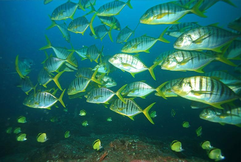 Viajes a Panama | Buceando en el Caribe