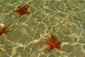 Viajes a Panama | Estrellas