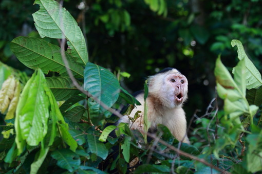 Viajes a Panama | Gamboa