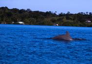 Viajes a Panama | Bocas Delfín