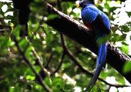 Viaje a Panama | Quetzal