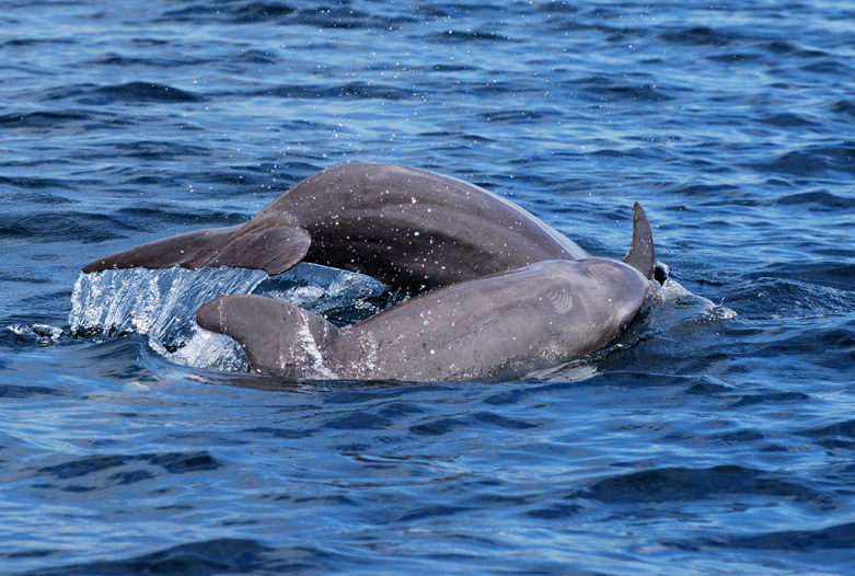 Viajes a Panama | Delfines en Bocas del Toro