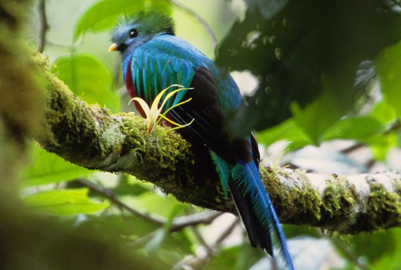 Viajes a Panama | Quetzal Boquete